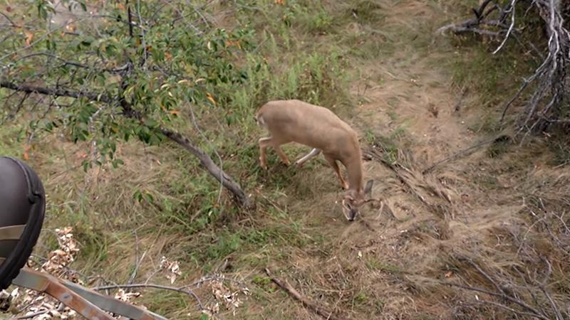 How Do A Deer's Eyes Work