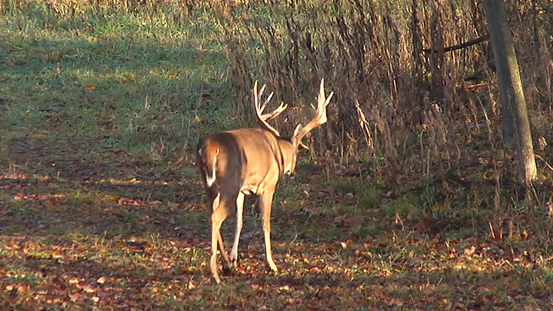 Why Is It Important For A Hunter To Recognize Wildlife 1