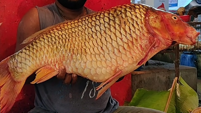 The Appearance Of The Common Carp