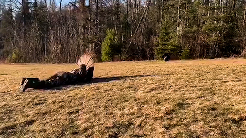 What Is The Safety Consideration When Hunting Wild Turkey FI
