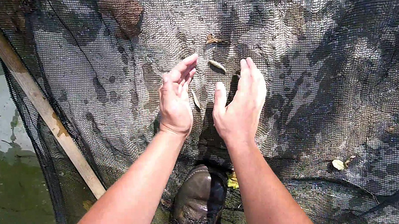 How To Catch Minnows