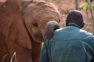 Developing bonds of trust... Njanji and her keeper