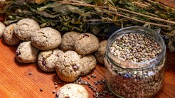 Photo: Cookies made from Hemp flour by Evelina Felisatti, a young entrepreneur in the rural area of North Piemonte, Croveo. By Maren Krings