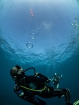Photo by Simon Pierce / Mafia Island Diving