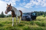 Much more than one horsepower! We're awoken by a herd of horses breakfasting on grass around our parked vehicles inside the Black Forest. Photo: Apoorva Prasad/ The Outdoor Journal