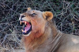 Photo: Chikunto Safaris