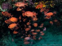 Photo by Simon Pierce / Mafia Island Diving