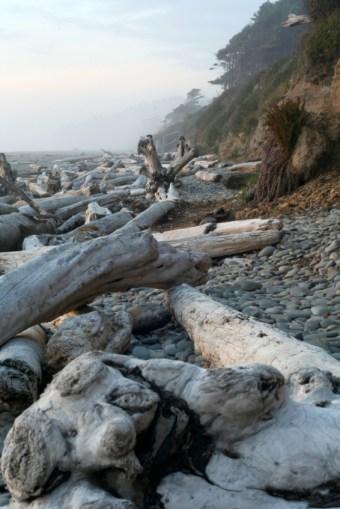 drfitwood misty beach