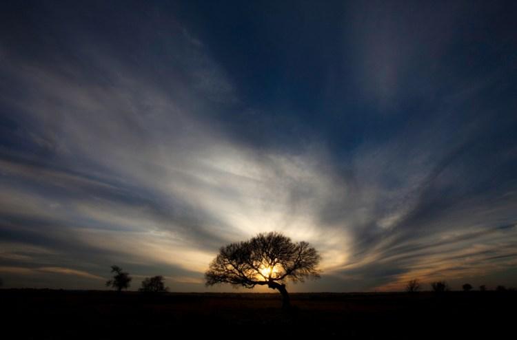 Tree at Sunset, Prosper, Texas