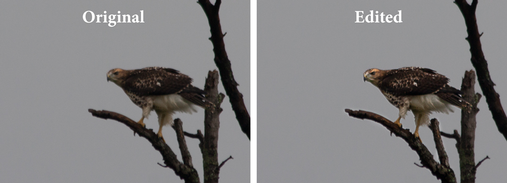 Getting Sharper Photos - a comparison of photos before and after post-processing