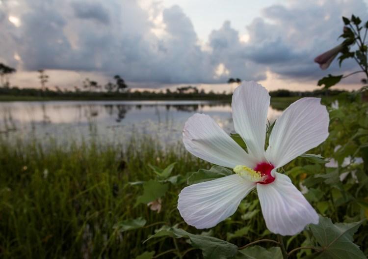 Flower at Seaside Western Lake