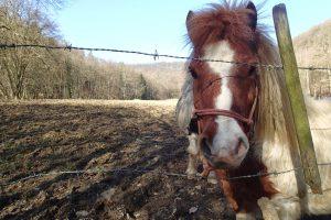 Ponys an der Wiese
