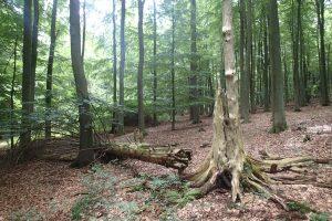 Totholz ist wichtig für den Wald