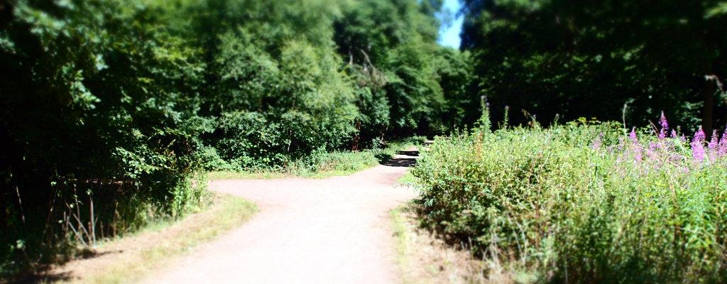 Take the trail?