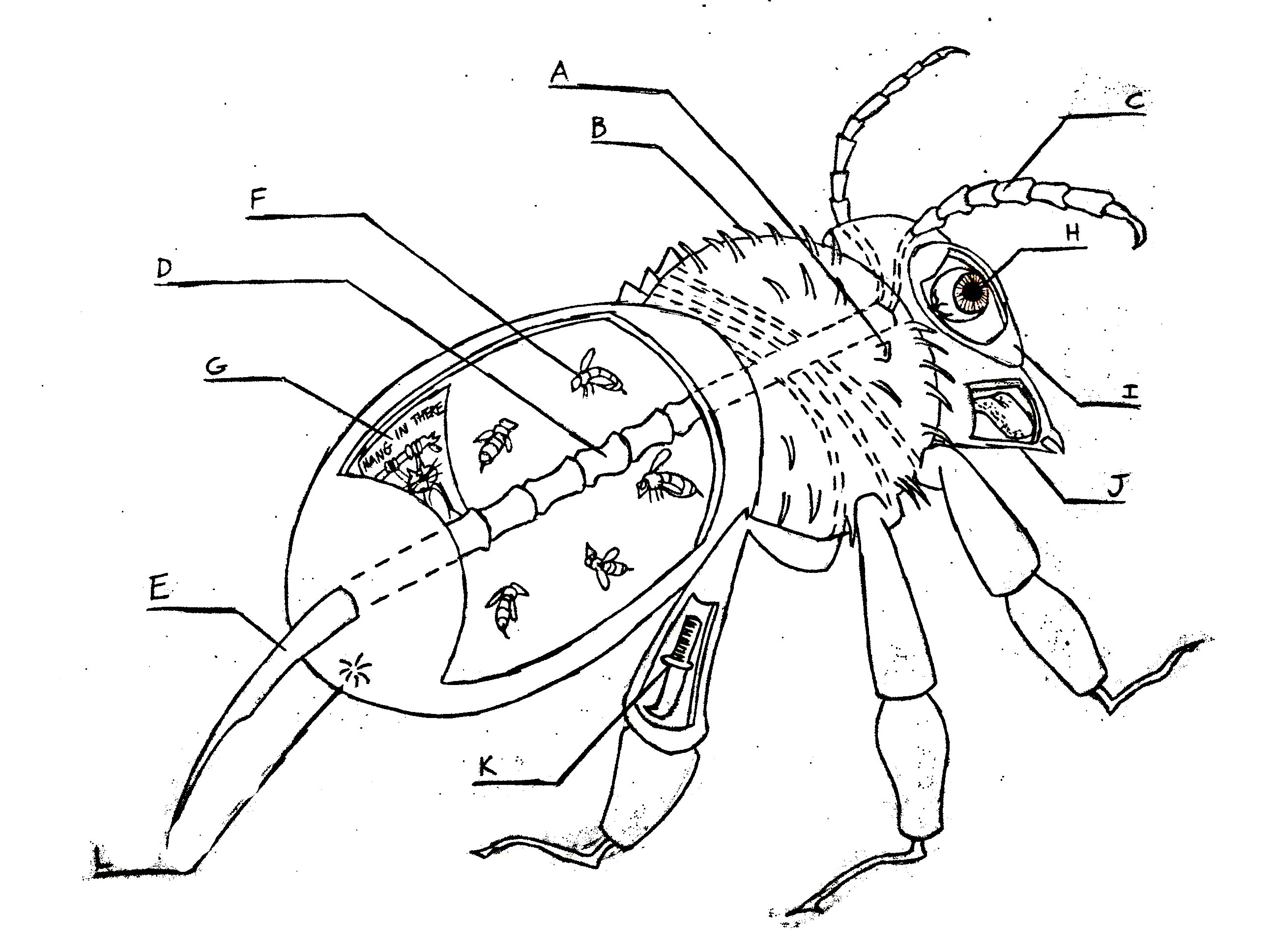 Bee Diagram Pictures To Pin