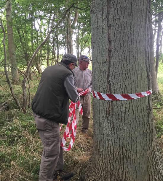 man tying striped tape around a tree