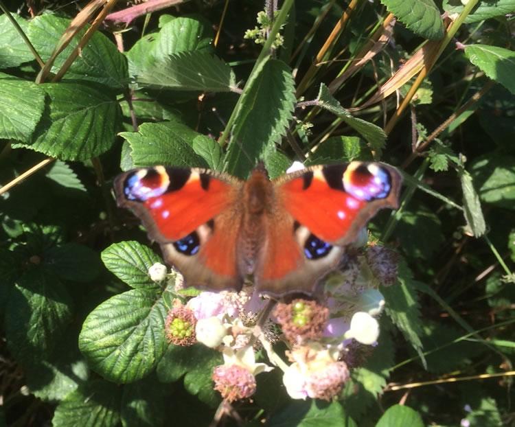 Butterfly ball 2017