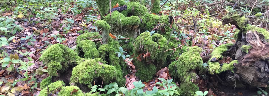 moss and leaves in woodland