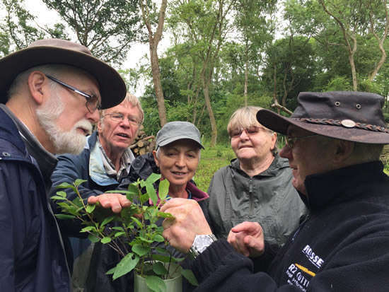 group of people in woodland looking at leaf