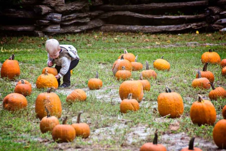 Island Farm to host Annual Pumpkin Patch Event:Pumpkin Picking, Mazes, Cider, Games, Weaving, and more!