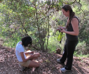 Citizen scientists collect data that will help researchers track the spread of sudden oak death. Photo: E. Loury