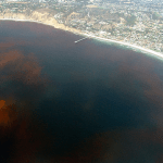 Sourcing Monterey Bay's Red-Tide