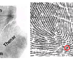 Photos courtesy of the FBI website: http://www.fbi.gov/about-us/cjis/fingerprints_biometrics/biometric-center-of-excellence/files/palm-print-recognition.pdf