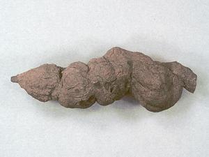 Fossilized feces. Credit: North Dakota Geological Survey