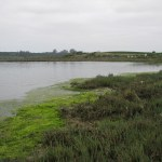 Field Trip to Elkhorn Slough