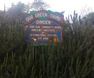 The sign marking the front of Our Green Thumb community garden on campus at the Monterey Institute of International Studies.