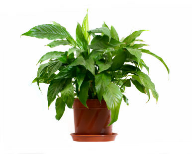 Five Reasons Your Houseplants Die And How To Save Them