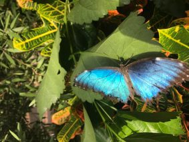 Elderly friend at Butterfly World Scottsdale
