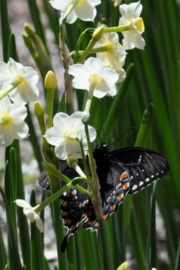 Butterfly outside Bulah's house