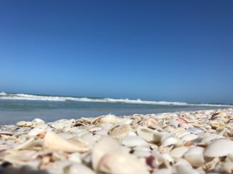 Shells and turquoise water, a great mix