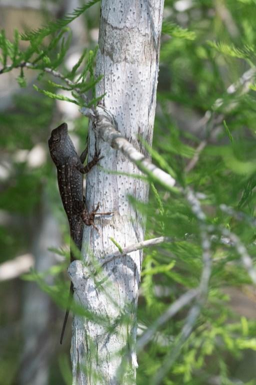 I like the dark lizard against the white tree
