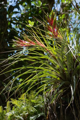 Ferns and Bromeliads