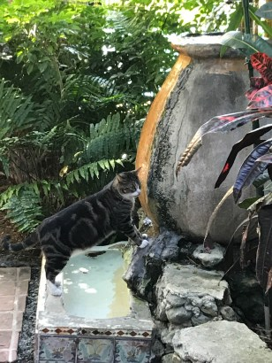 """Cat drinks from a """"urinal"""" fountain at Ernest Hemingway House"""