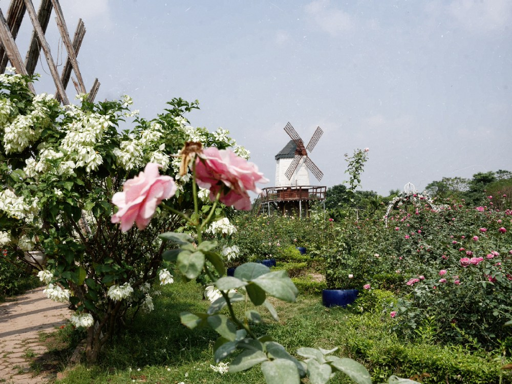 Windmill, Red river garden, hanoi