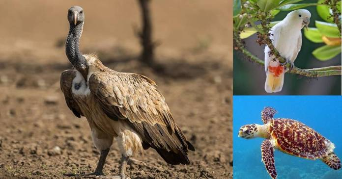 These five animals are on the verge of extinction from the world, many more species under threat