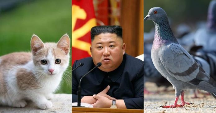 Kim Jong-un orders to elimination cats and pigeons to stop COVID-19 spread