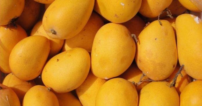 good ripe mangoes