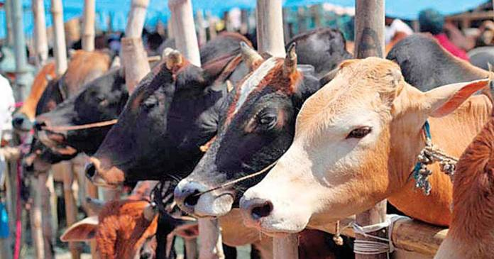 beef trade banned in Hindu, Sikh and Jain majority areas, new bill introduced in Assam Legislative Assembly