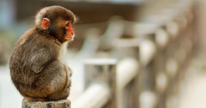 violence with animals in Karnataka 50 monkeys poisoned and beaten to death