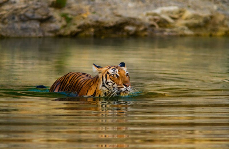 A Complete Guide To The Ranthambore National Park - Outlook Traveller