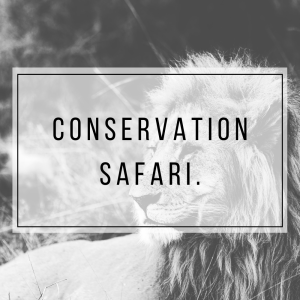 Why should you pick a safari that is with a conservancy and help the conservation of the animals & community in the Mara.