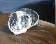 PIGGY The Guinea pig Acrylic on canvas (painted for a commission)