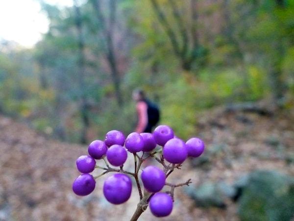 Bukhansan fall