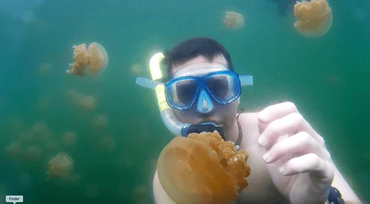 Jelly Fish Lake Palau