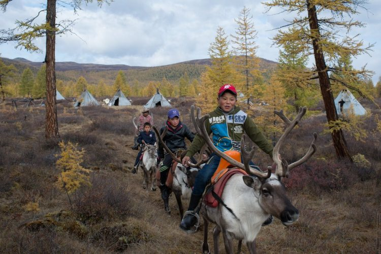 Renas na Mongolia