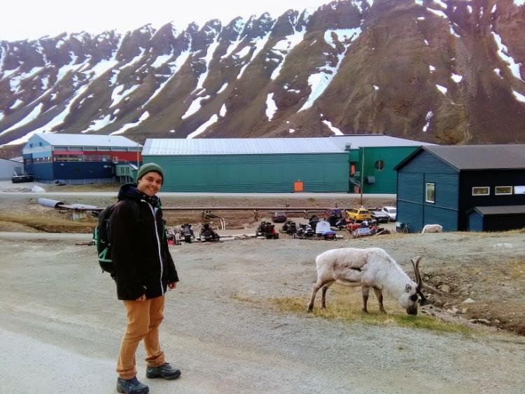 Svalbard Norway Longyearbyen reindeer